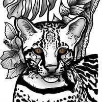Imagem de perfil: Talita Santopietro